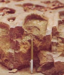 a rocha(5)